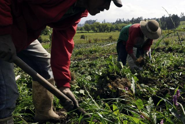 Piden a  alcaldes formular proyectos agropecuarios en Meta, Arauca, Guaviare, Vichada y Casanare