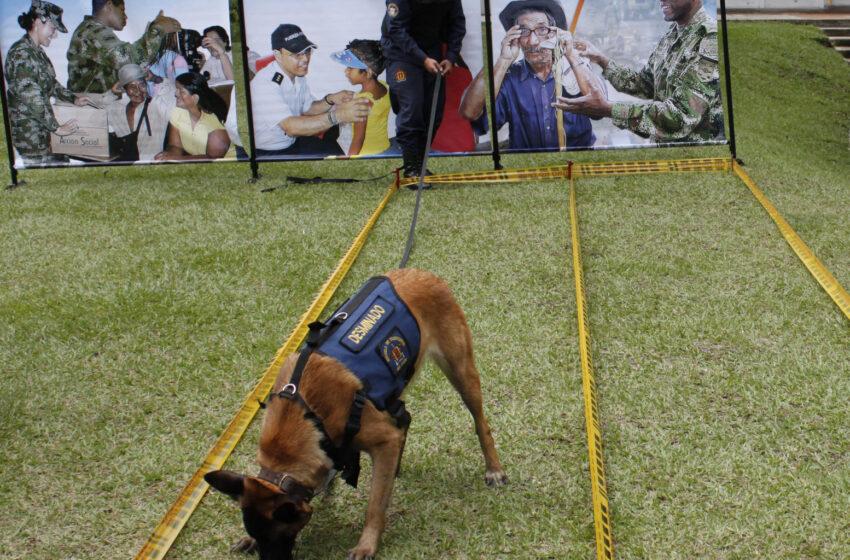 Perros adiestrados para detectar minas, sustancias, explosivos y rescatar se entrenan en Apiay