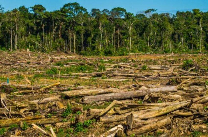 El gobierno ha sido incapaz de detener a los malvados que destruyen la naturaleza
