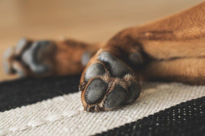 Protectora de animales pide investigar la muerte de un perro incinerado