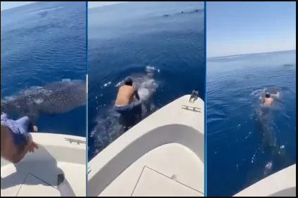 [Video] Hombre se monta sobre un tiburón ballena y se aferra como un jinete