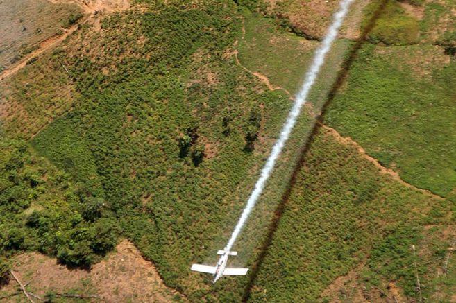 El gobierno nacional quiere aspersión con Glifosato y los cultivadores de coca la rechazan