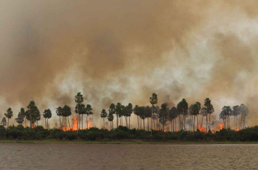Los fuegos en el Pantanal brasileño obligan a declarar el estado de calamidad