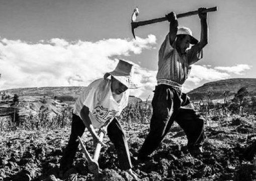 Cada día es más difícil la situación de los campesinos, pese a las promesas gubernamentales