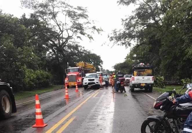 Milagrosamente se salvan 4 personas al caer árbol sobre su automóvil