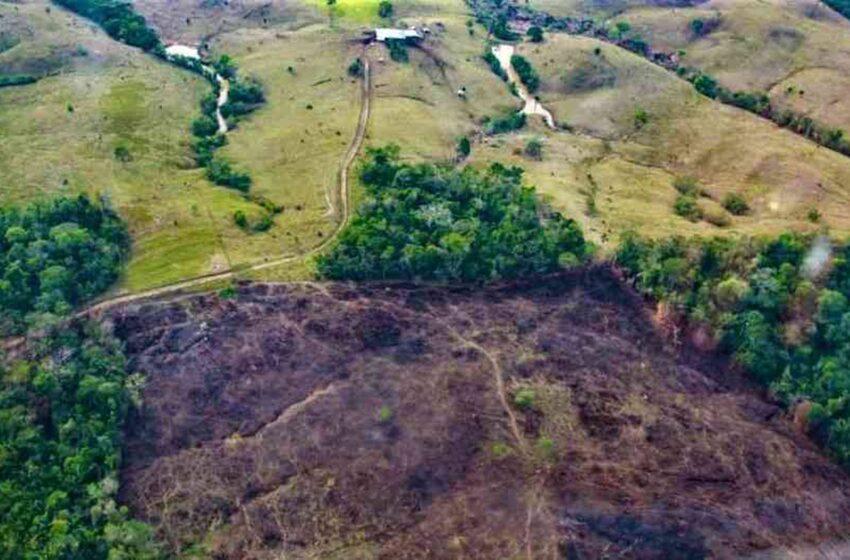 Guerra contra la desforestación en el sur del Meta y la Orinoquia, anuncia el Gobernador
