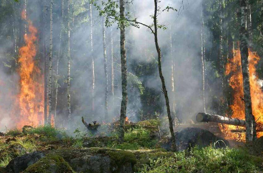 Alertas tempranas por incendios forestales en el Meta