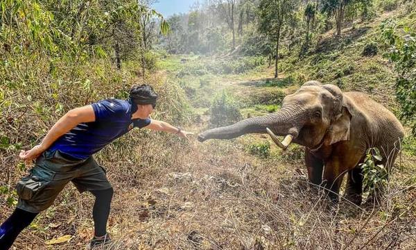 Elefante reconoce y saluda al veterinario que le salvó la vida hace 12 años