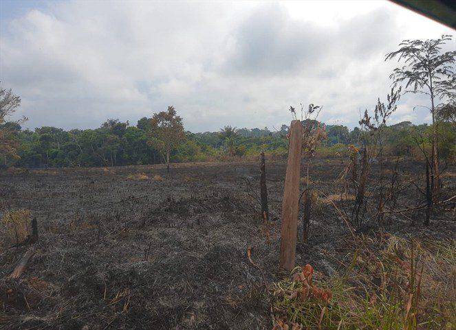 ¿Quién tiene la razón sobre posible deforestación y amenazas proferidas en zona rural de Puerto Gaitán?