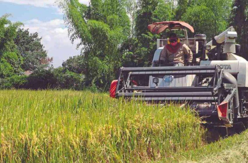 Los arroceros estamos abandonados por el gobierno, dicen los arroceros de Arauca