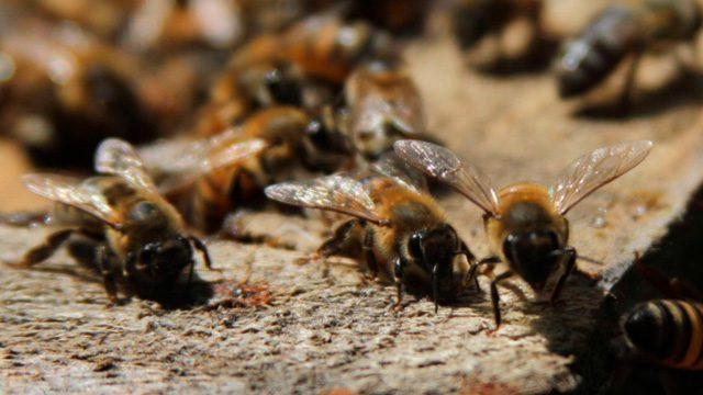 Mujer de 71 años murió al ser atacada por un enjambre de abejas en Apiay