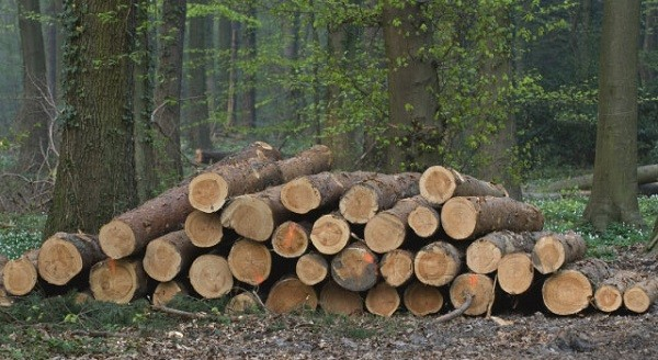 Acusan al ministro de Medio Ambiente de interferir a favor de talas ilegales