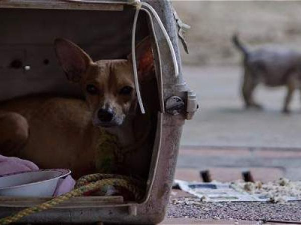 Ciudadanos protestaron frente a la Alcaldía contra el maltrato animal
