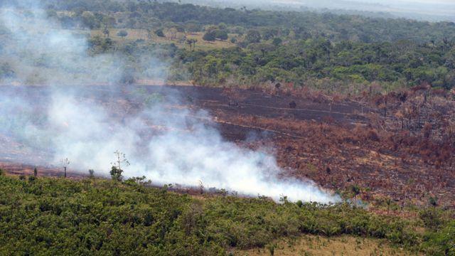 Pese a los intereses criminales y económicos, La Macarena le hace frente a la deforestación