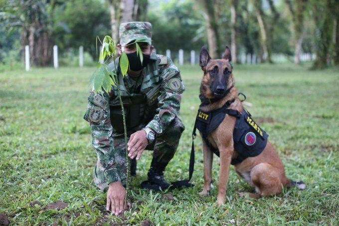 El ejército defiende la naturaleza plantando árboles en Meta, Guaviare y Vaupés