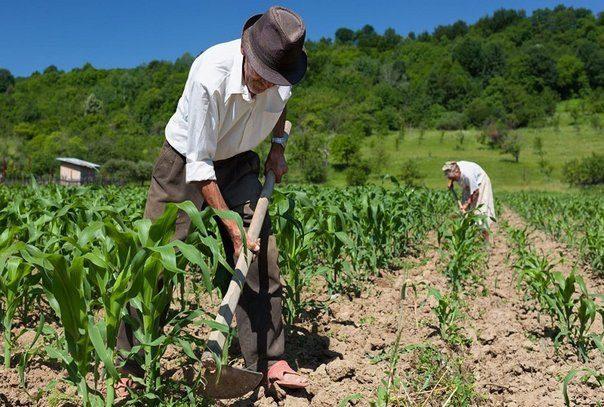 Los agricultores solo pedimos lo que en derecho nos corresponde, dicen cultivadores del Meta