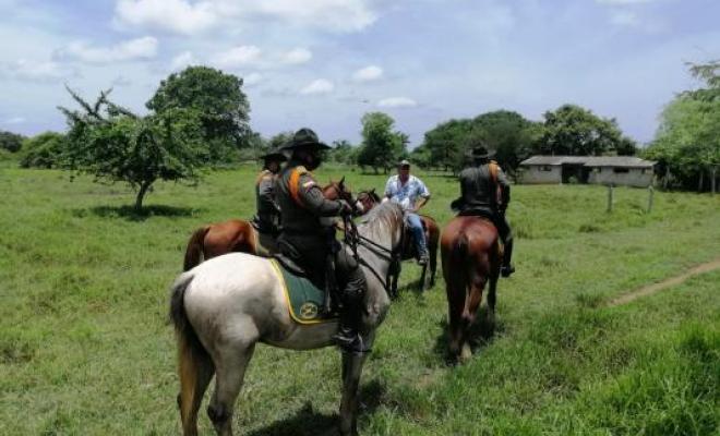 Establecer la policía montada para evitar los abigeos y ladrones en zonas rurales del Meta piden campesinos